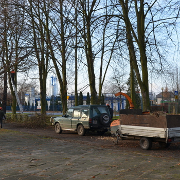 Galeria cięcie drzew